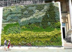 """Van-Gogh """"Campo de trigo con cipreses"""", como un cuadro viviente en el Sq. Nacional-Gallery Trafalgar."""