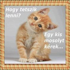 Hungarian Tattoo, Funny Art, Holidays And Events, Famous Quotes, Good Morning, Diy And Crafts, About Me Blog, Geek Stuff, Memes