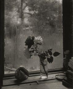 """ La dernière rose - Photographie de Josef Sudek"