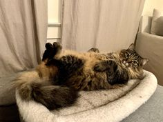 """Happy #TRT - Tummy Rub Tuesday (Week 353) Hello everyone, Welcome to another week of Tummy Rub Tuesday! The easiest way to enter is by sending them in via info@katzenworld.co.uk. Or just leave a comment with a link to the post / photo you'd like us to use on this blog post. """"This is not my cat but one that is shared here […] #Katzenworld, #Cat, #Cats, #Cute, #Funny, #Katze, #Katzen, #Kawaii, #Pets, #ねこ, #猫 #Tummyrubtuesday"""