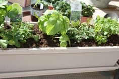 Mommy Project: Starting a Vegetable Garden