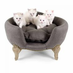 Your dog's happiness isn't for sale, but luckily our exclusive Antoinette dog beds are. Get it now for your dog at Lord Lou. Pet Beds, Dog Bed, Pet Furniture, Animal Decor, Tub Chair, Your Dog, Rococo, Charcoal, Armchair