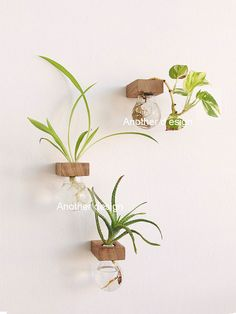 LAMPA II Light bulb and wood vase Upcycled light bulb vase Light Bulb Vase, Light Bulb Crafts, Flower Vases, Flower Pots, Wooden Vase, Wedding Vases, Vase Shapes, Vase Fillers, Hanging Plants