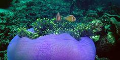Nemo Rajaampat