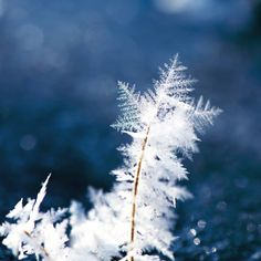 Nature is blooming  while we are all freezing  #frozen #picoftheday #cold #winter