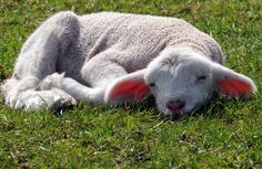 Haiku of the day -  I hear spring begin.  Not a chirrup, but a hum -  distant lawnmowers.