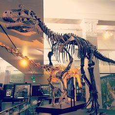 cryolophosaurus!!! at the auckland war memorial museum
