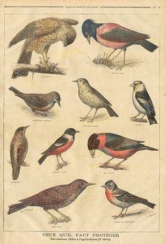birds || le petit journal 31 jan 1897