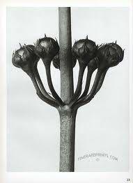 karl blossfeldt libro - Buscar con Google