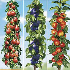 September, Stuffed Peppers, Vegetables, Plant, Stuffed Pepper, Vegetable Recipes, Stuffed Sweet Peppers, Veggies
