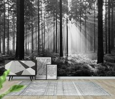 Trees Sunlight Black and white Black White Forest wall mural from Happywall