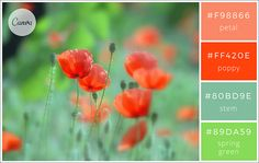 100 Brilliant Color Combinations and How to Apply Them to Your Designs – Design… Web Colors, Types Of Colours, Colour Pallete, Color Combinations, Color Palettes, Website Color Schemes, Colour Schemes, Spring Green, Grafik Design
