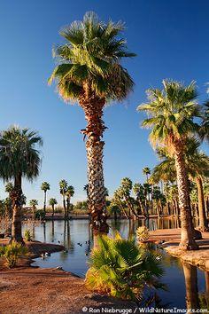 Papago Park in Tempe, Arizona.  Near the Phoenix Zoo and the Desert Botanical Gardens