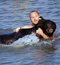 Man Saves 375 lbs Black Bear from Drowning (with Photos and Video) -  The 375 lbs black bear had been spotted in a residential area, obviously looking for food, and was shot with a tranquilizer dart. Unfortunately, before it went under, it jumped in the water of the Gulf of Mexico...  via- TreeHugger