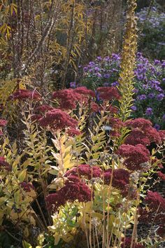 8 Perennials for Great Fall Color || Trees haven't cornered the market on autumn splendor. Add these flowering perennials for a foliage sight to behold