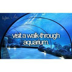 Visit A Walk Through Aquarium