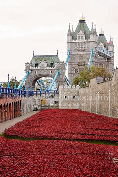 Ceramic Poppies London Photography Red by PrettyYouPhotography