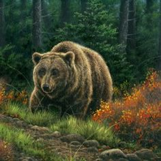 12 beaux tableaux abraham hunter - Page 6 Bear Paintings, Wildlife Paintings, Wildlife Art, Art D'ours, Hunter Page, Man Clipart, We Bear, Painter Artist, Forest Animals