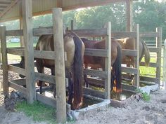 Treating Founder (Chronic Laminitis) without Dream Barn, Dream Stables, Horse Paddock, Horse Shelter, Horse Facts, Horse Stalls, Barn Plans, Horse Care, Tallit