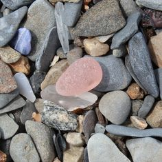 Pink sea glass stopper on Spectacle Island, Boston Harbor. Rare beauty!