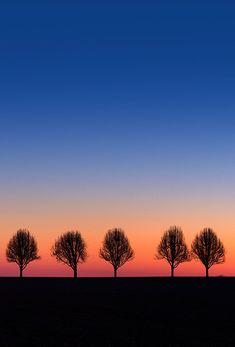 Trees watching sunrise
