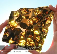 The beautiful and mysterious Fukang meteorite. Within the rock, translucent golden crystals of a mineral called olivine gleamed among a silvery honeycomb of nickel-iron. Minerals And Gemstones, Rocks And Minerals, Iron Meteorite, Beautiful Rocks, Beautiful Things, Stunningly Beautiful, Beautiful Images, Rocks And Gems, Science And Nature