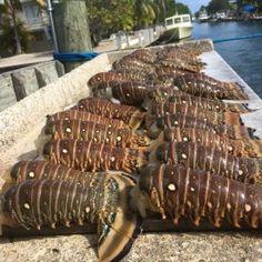 Boneafide Fishing Charters - Flats, Big Pine Key, Florida - FishingBooker.com