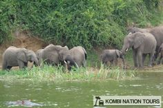 Elephants on the Kazinga Channel! For more information on Uganda's National Parks and Reserves, please visit our website.
