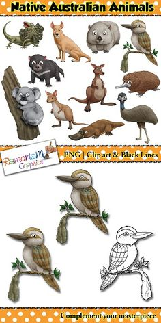 Australian Animals clip art set containing realistic illustrations of animals that are native to Australia