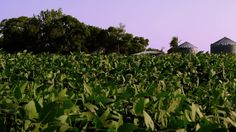 agriculture farming - Royalty Free Stock Footage- High Quality VideoFo...