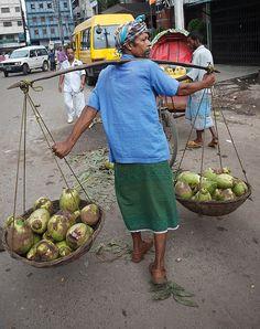 carrying coconuts to market, Dhaka, Bangladesh