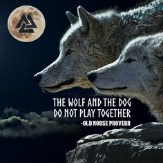 Norse Pagan, Old Norse, Personal Integrity, Proverbs, Wolf, Fun, Movie Posters, Lamb, Quotes