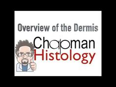 3 Minute Histology - Overview of the Dermis - YouTube