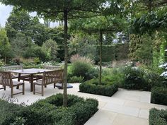 Stunning roof-trained Liquidamber trees were placed near the dining area in this garden design project in Harpenden, creating height and interest. Box hedging adds a formal touch to the softer more informal planting.