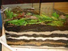 terrarium de vers de terre
