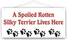 A Spoiled Rotten Silky Terrier Lives Here