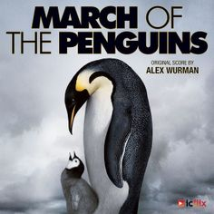 """Academy Award Winner for """"Best Documentary"""" starring #MorganFreeman. March of the Penguins is available on icflix.com"""