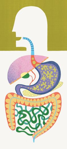 The microbes in your gut may be making you fat or keeping you thin - The Washington Post