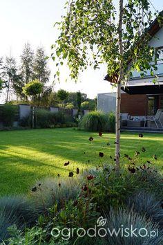 Small Gardens, Outdoor Gardens, Garden Ideas South Africa, Modern Front Yard, European Garden, Garden Design Plans, Gravel Garden, Big Garden, Small Backyard Landscaping