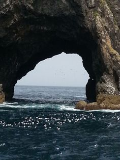 Hole In The Rock (Bay of Islands) in Te Tii