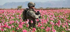 Comment une fleur rose a battu l'unique superpuissance mondiale (Tom Dispatch)