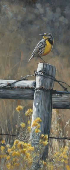 Terry Isaac Wildlife Artist - Penticton, BC - Art Gallery | Facebook