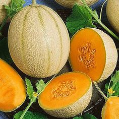 Cantaloupe Imperial 45 - 83 days. AAS Winner for 1935. Fruits were developed for uniform sizes and thrive in hot, humid climates. Heavy Producer. Sweet, deep orange fruit. Good shipper. Resistant to P