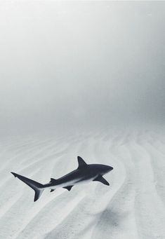 Gorgeous shark shot
