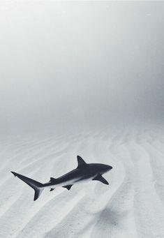 Gorgeous shark shot