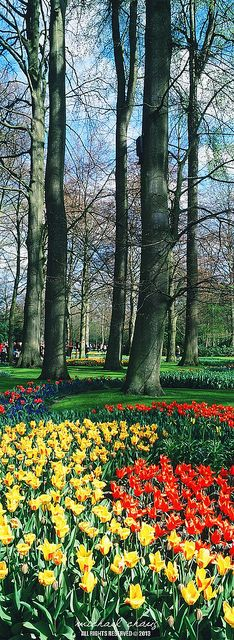 Keukenhof Gardens, Netherlands.  Go to www.YourTravelVideos.com or just click on photo for home videos and much more on sites like this.
