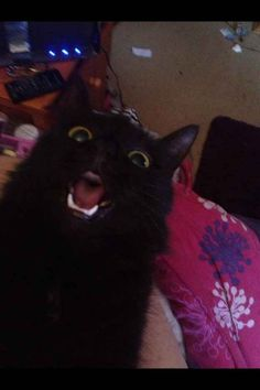 31 Cat Reactions for Everyday Situations