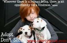 Photography donated by #alexkrukphotography for Shorty's Pit Bull Rescue