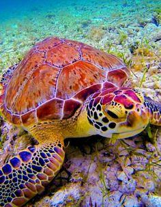 Underwater Friend by Cary Quinn on , turtle sea ocean Beautiful Creatures, Animals Beautiful, Cute Animals, Animals Sea, Nature Animals, Beautiful Children, Underwater Creatures, Ocean Creatures, Fauna Marina