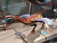 """Throw back to our visit a couple years ago to @naturhistorisk_museum_oslo in #Oslo, #Norway, where we saw this colorful Caudipteryx! Caudipteryx was a small, feathered theropod (the genus name means """"tail feather"""") #iknowdino #dinosaur #dinosaurs Oslo, Dinosaurs, Norway, Feather, Museum, Couple, Colorful, Quill, Feathers"""